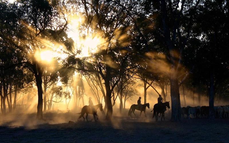 goedkope paarden dekens